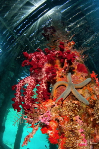 Under the jetty, Arborek, Raja4divers, Raja Ampat. by Filip Staes